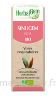 Herbalgem Sinugem Solution Buvable Bio Spray/15ml à VIC-FEZENSAC